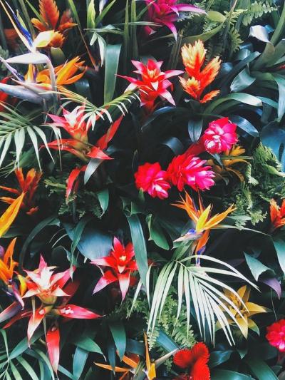 fleurs exotiques inspiration du dimanche