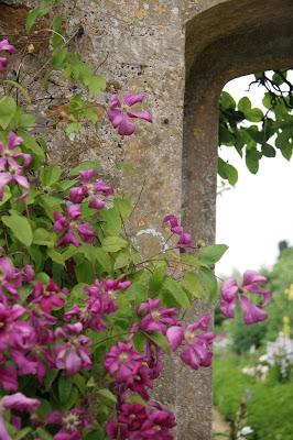 Rousham Gardens Lower Heyford Climbing Viticella Clematis