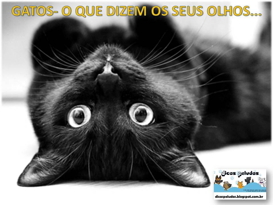 Os olhos são um outro órgão que os gatos usam para a comunicação. Gatos com  olhos totalmente abertos e olhando diretamente para você quer dizer