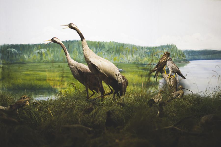 Biologinen museo Turussa on helppo museokohde lapsiperheille.