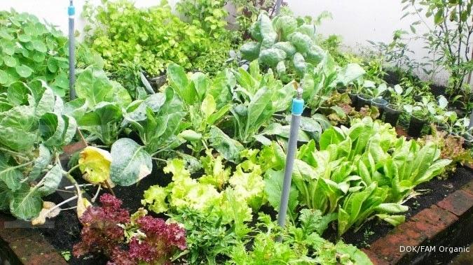 Contoh Desain Rumah Kebun