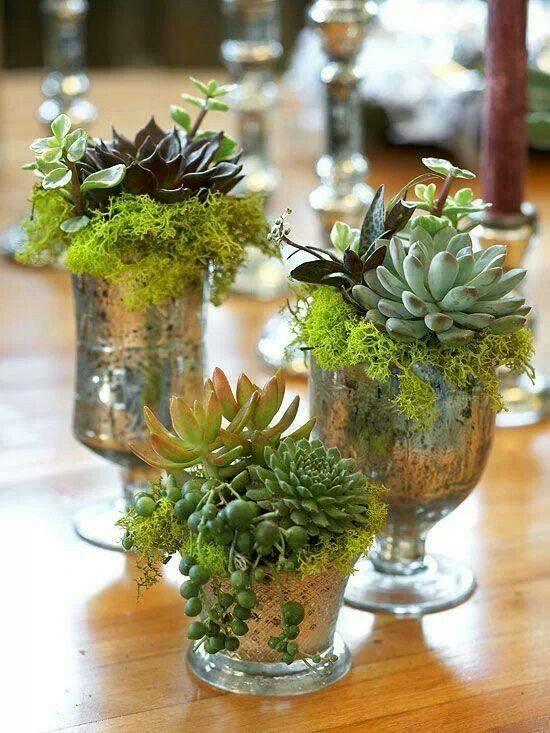 Mis cactus y ventas y compras: Ideas para decorar con cactus !!!