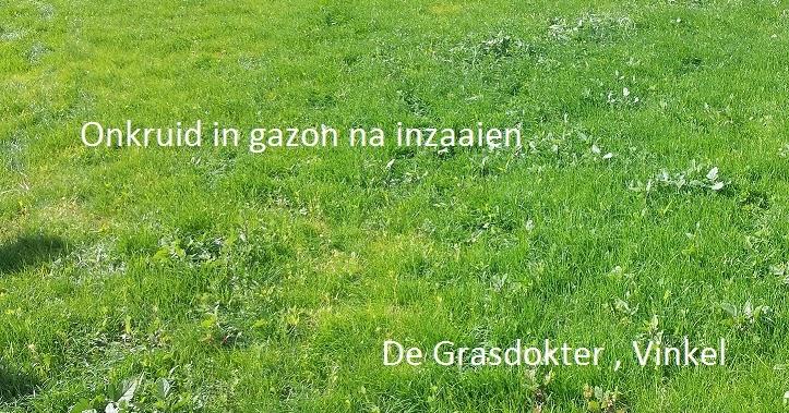 De Grasdokter Onkruiden In Het Gazon