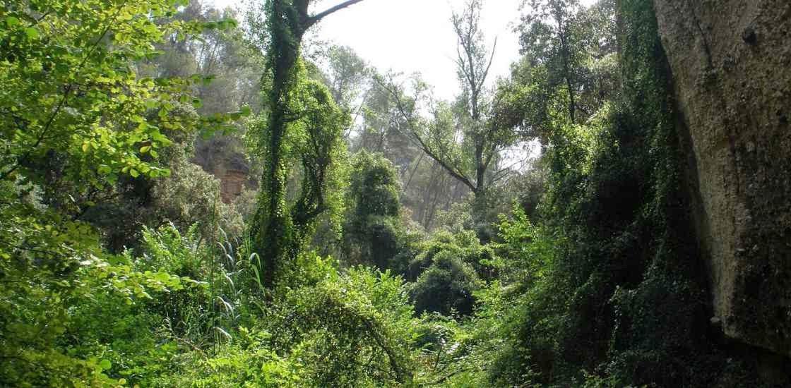 Selva pluvial o pluvisilva