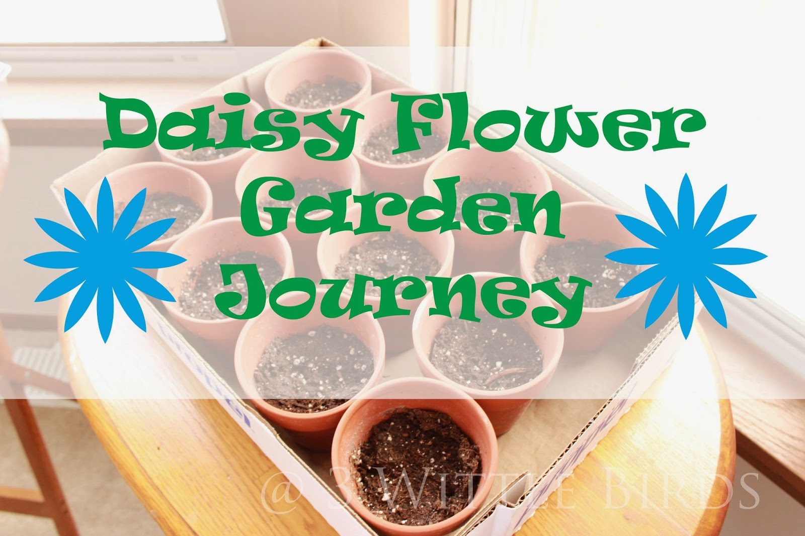3 wittle birds: daisy flower garden journey: session 1