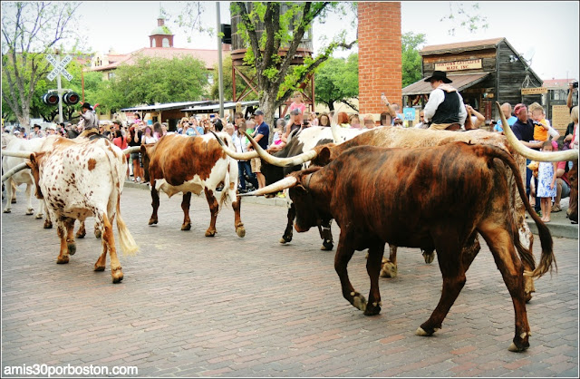 Fort Worth Stockyards: Texas Longhorn