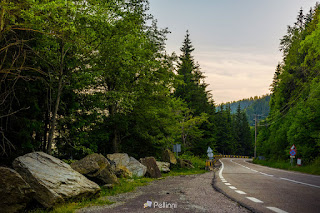sphalt road through the green forest in mountains at sunrise