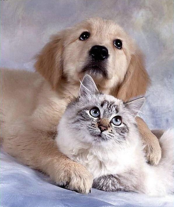 Latest Funny Pictures: Funny Dogs And Cats Together
