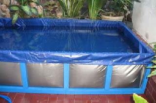 cara budidaya ikan lele dalam kotak,cara budidaya ikan lele di kolam tembok,cara budidaya ikan lele di kolam tanah,cara budidaya ikan lele sangkuriang di kolam terpal,