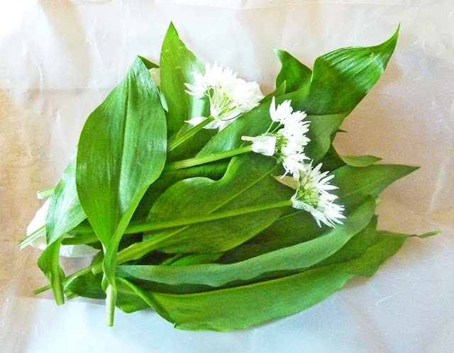 freshly picked wild garlic leaves and flowers