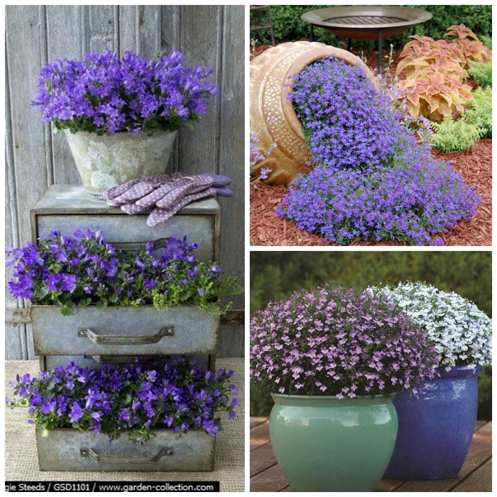 Jakie Kwiaty Posadzić W Maju By Kwitły Do Późnej Jesieni