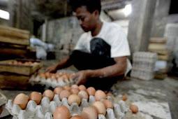 Edarkan Isu Telur Palsu di Masyarakat Dapat Terancam UU ITE
