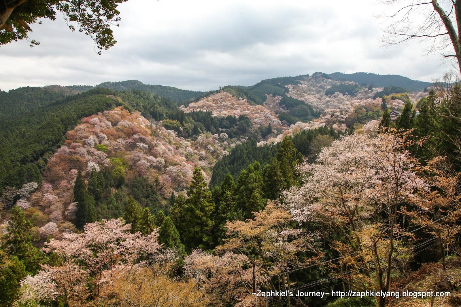 【日本 奈良】2015春季日本賞櫻行Day16 - 一目千本的奈良吉野山櫻花