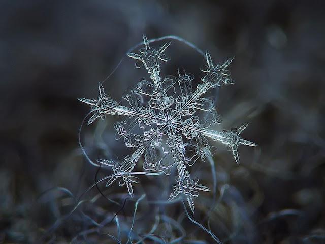AMAZING MACRO-PHOTOGRAPHY OF INDIVIDUAL SNOWFLAKES