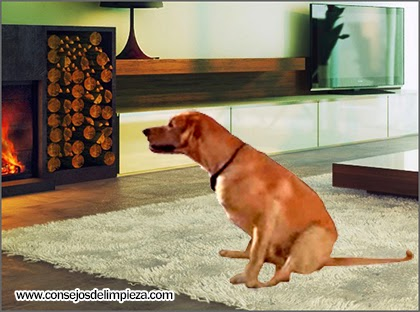 Limpie la orina del perro de la alfombra