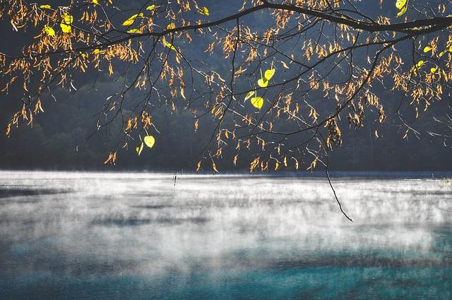 ảnh nhánh cây mùa thu với lá vàng
