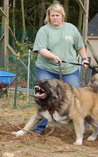 cães ferozes