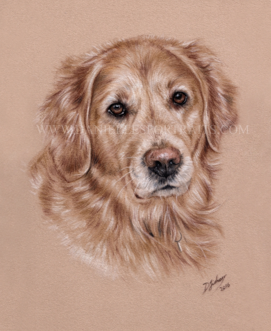 10-Gus-Danielle-Fisher-Realistic-Pet-and-Wildlife-Portraits-www-designstack-co