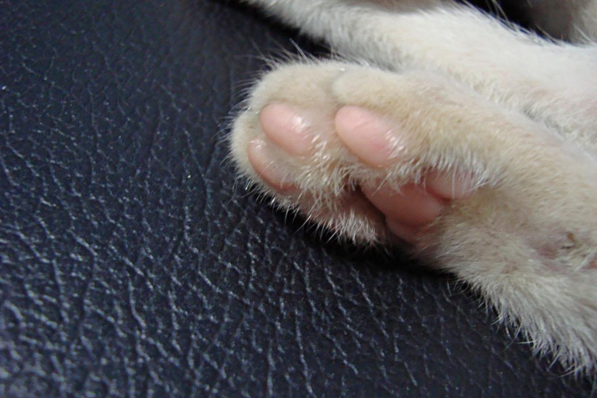 고양이 발바닥