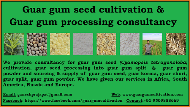 Guar gum seed cultivation  and guar gum processing consultancy, Guar gum seed cultivation consultancy, guar gum processing consultancy, Guar, guar gum, guar gum and slick water, Guar gum price, Guar gum export,  guar gum news, NCDEX guar gum price, Guar gum report, guar seed production, guar gum consultant, guar seed export, guar gum export from india 2017-2018 , guar, guar gum, guar gum news, Guar gum export-2017-2018, Guar gum export-from India during 2017-2018, Guar gum export data -2017-2018, Guar gum rate , NCDEX guar gum price,  guar gum export-2017, guar gum export-2018, guar gum demand-2017, guar gum demand-2018, guar gum production, guar gum cultivation, guar gum cultivation consultancy, Guar, guar gum, guar price, guar gum price, guar demand, guar gum demand guar seed production, guar seed stock, guar seed consumption, guar gum cultivation, guar gum cultivation in india, Guar gum farming, guar gum export from india, Fundamentally Guar seed and guar gum are very strong , Guar, guar gum, guar price, guar gum price, guar demand, guar gum demand, guar seed production, guar seed stock, guar seed consumption, guar gum cultivation, guar gum cultivation in india, Guar gum farming, guar gum export from india , guar seed export, guar gum export, guar gum farming, guar gum cultivation consultancy, today guar price, today guar gum price, ग्वार, ग्वार गम, ग्वार मांग, ग्वार गम निर्यात 2017-2018, ग्वार गम निर्यात -2018, ग्वार उत्पादन, ग्वार कीमत, ग्वार गम मांग