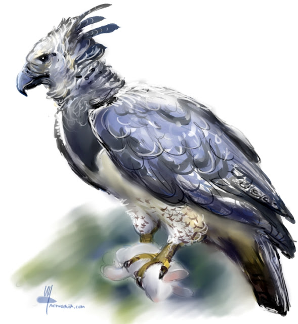 Harpy Eagle birdpainting by Artmagenta