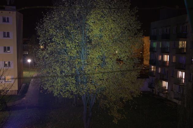 Zdjęcie drzewa po oświetleniu latarką