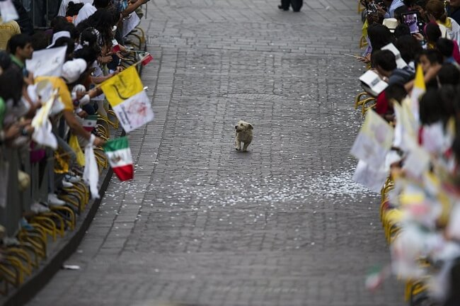 25 Thrilling Images That Made Our Day - A dog who found himself at the center of attention