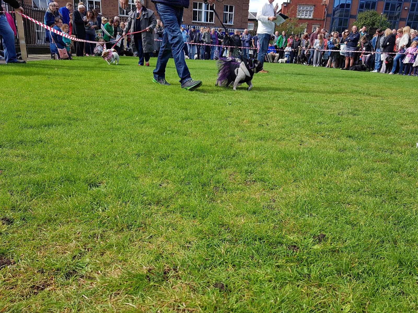 Dog Walking Macclesfield