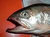 Le saumon atlantique ou saumon de l'Atlantique (Salmo salar) est une espèce de poisson (saumon) appartenant à la famille des Salmonidés