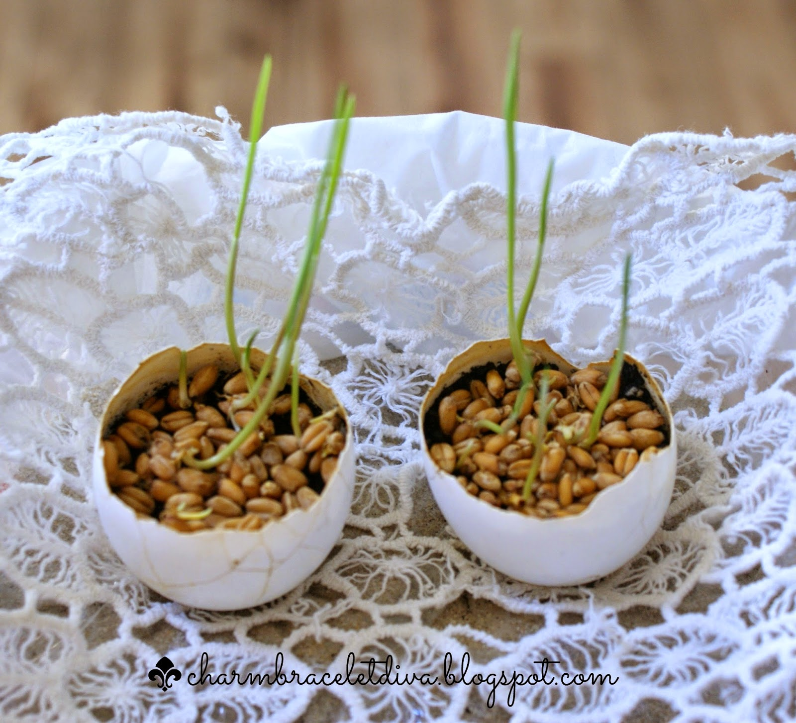 egg shells with dirt and wheat grass sprouts