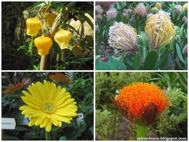 Цветочный Купол, Сингапур - Южноафриканский сад