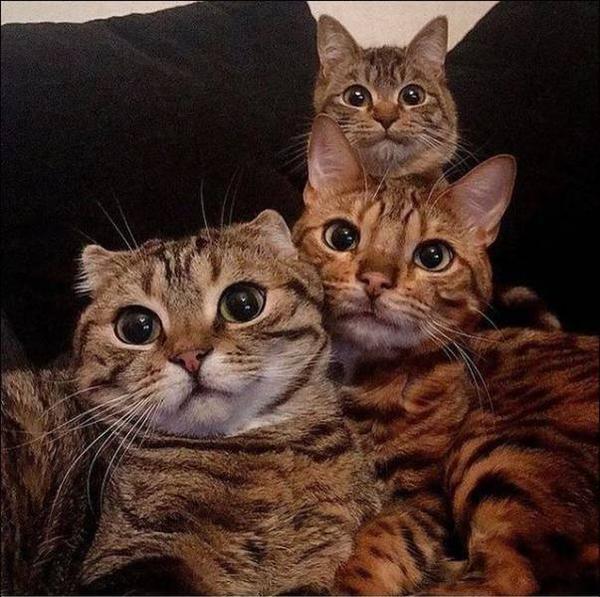 Смешное селфи кошачьей семьи