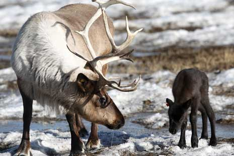 Nanda Nichan Blog Binatang di Siberia