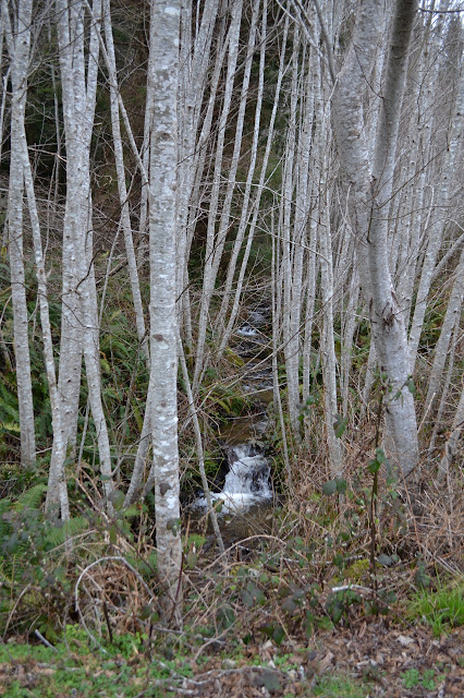 creek within alders