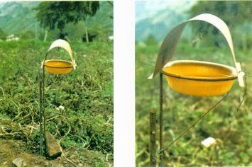 Resultado de imagen para tipos de feromonas en insectos