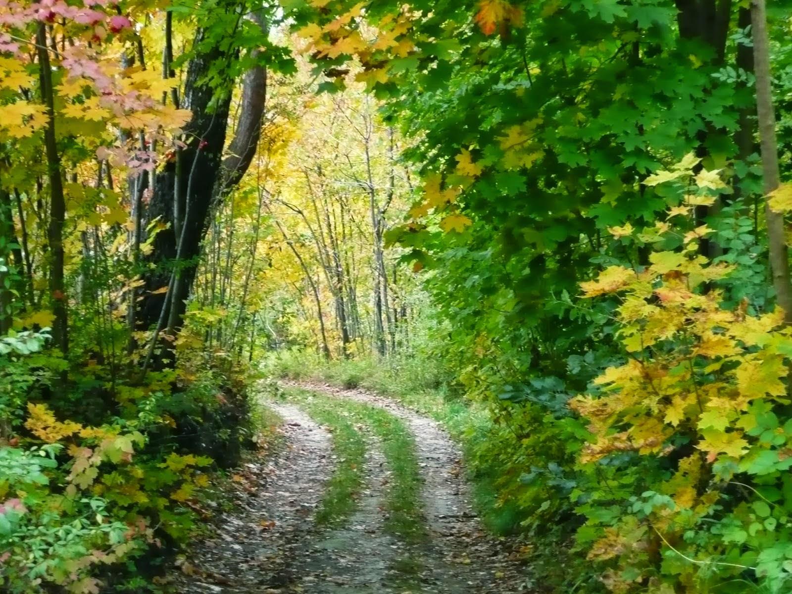Impresje Codzienne W Jesiennym Utuleniu