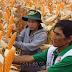 Bỏ túi kỹ thuật trồng ngô đơn giản mang lại vụ mùa bội thu