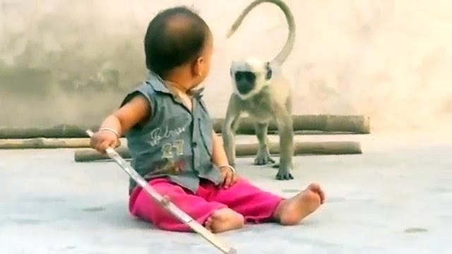Cute Baby vs Naughty Monkey