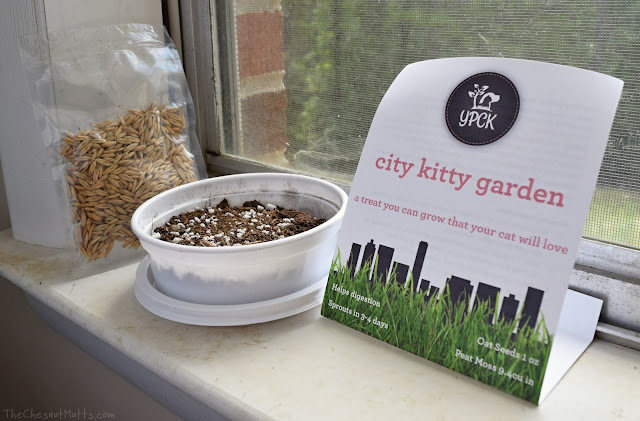 YPCK City Kitty Oat Grass Garden Kit