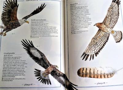 ilustrowany inwentarz ptaków recenzja