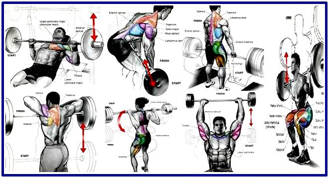 Most efficient exercises to increase your muscle size