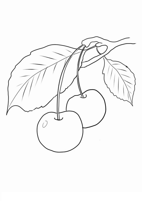 Tranh tô màu quả cherry