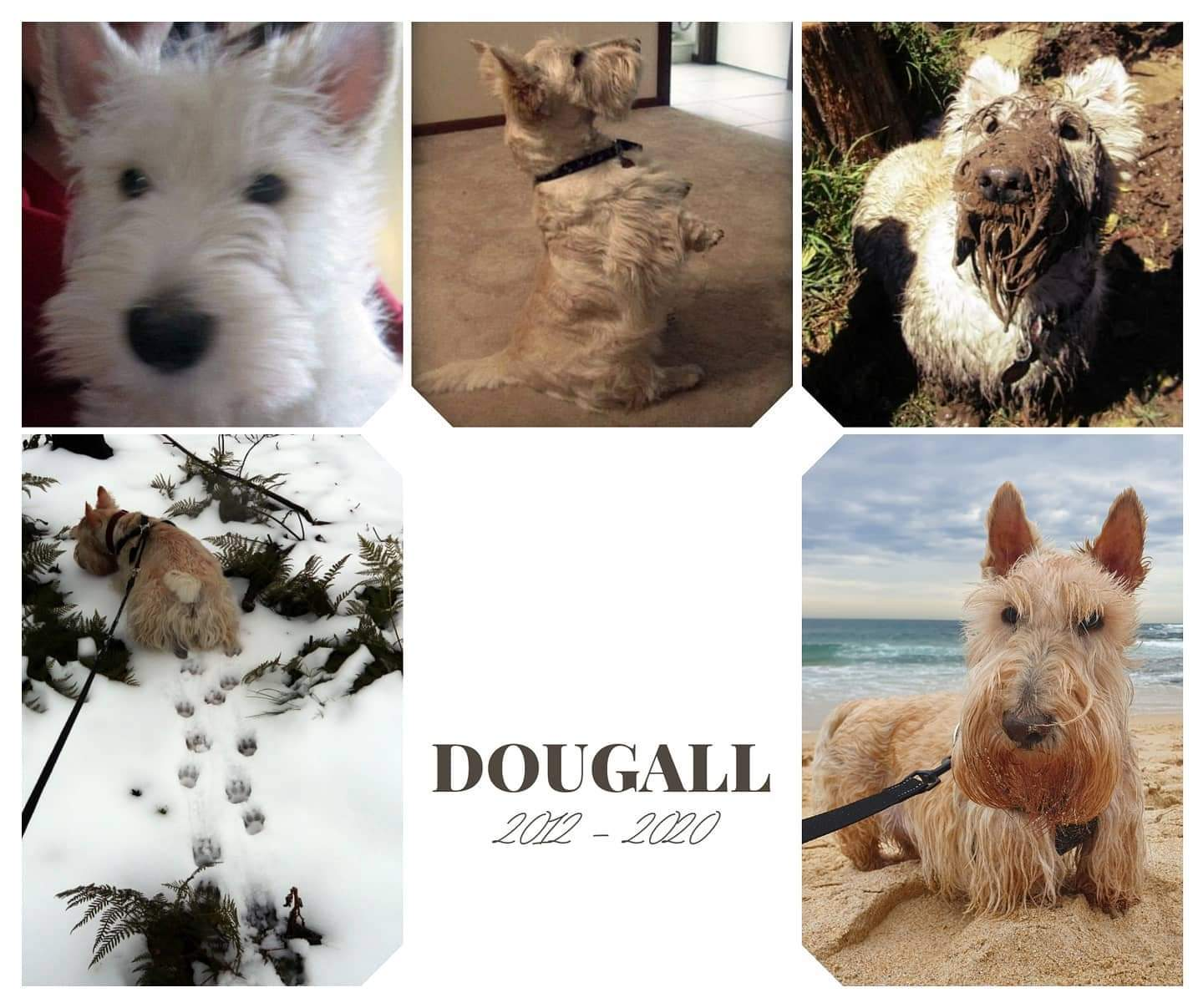 Dougall