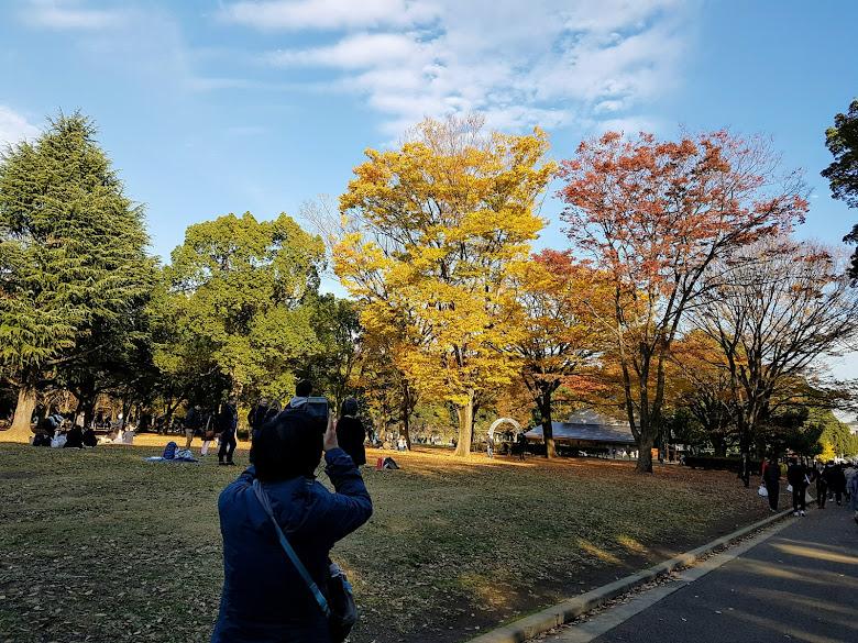 代代木公園內,嘗試捕捉秋色景