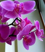 http://ogorod.mirtesen.ru/blog/43743294012/Kak-pravilno-obrezat-orhideyu-posle-tsveteniya