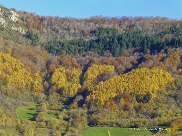 Bosque de Betelu, por El Guisante Verde Project
