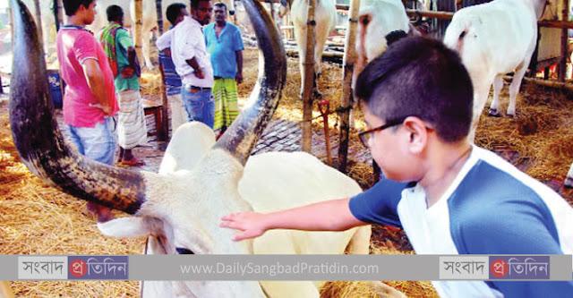 Daily_Sangbad_Pratidin_cow_hat.jpg