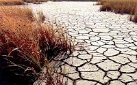 Üzerinde kurumuş bitkiler olan kuraklıktan çatlamış kuru toprak