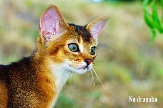 Jaka kuweta dla kota?