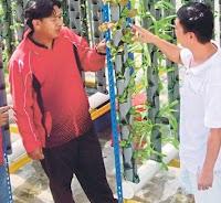 teknik pertanian
